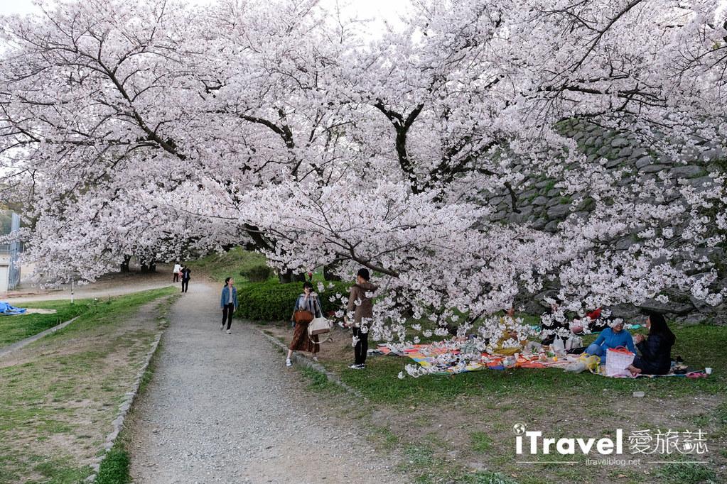 福岡賞櫻景點 福岡城 (48)