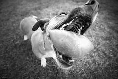 4/52 Retrato de animal. Mi pelota!!!