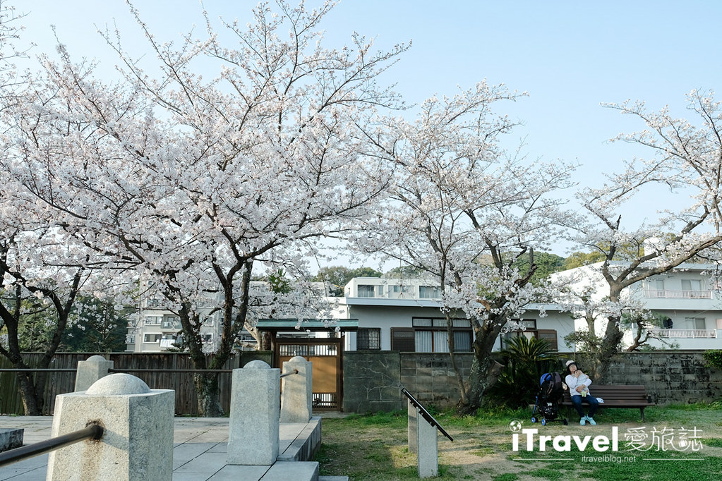 福岡賞櫻景點 西公園Nishi Park (19)