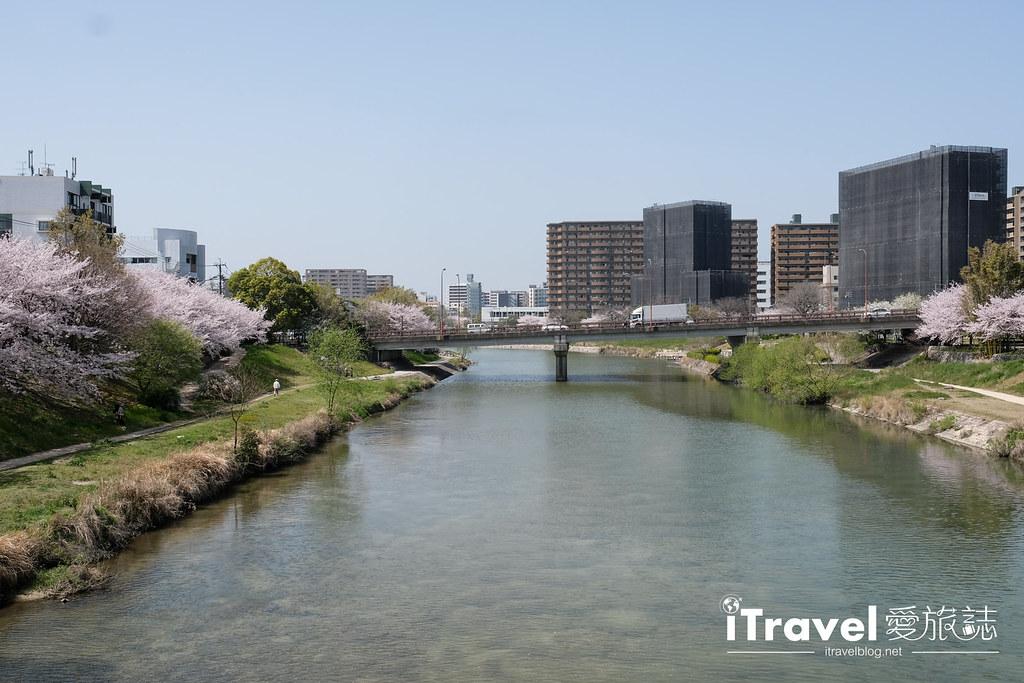 福岡賞櫻景點 美野島南公園 (18)