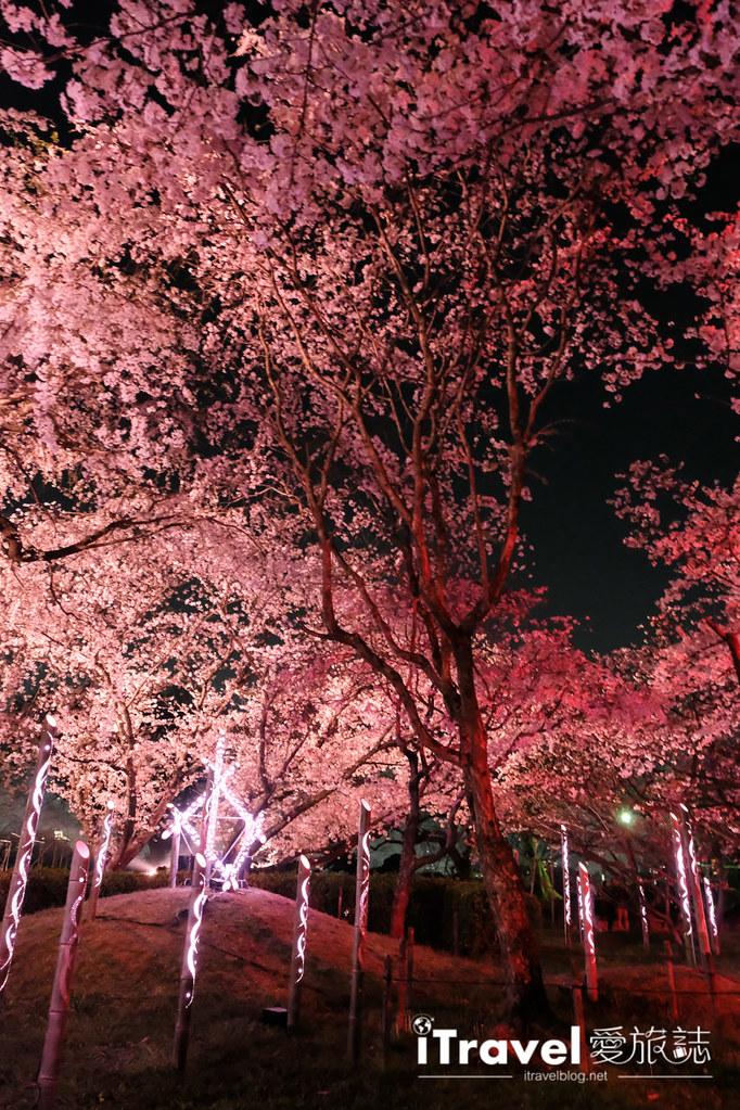 賞櫻景點 福岡城夜櫻 (69)