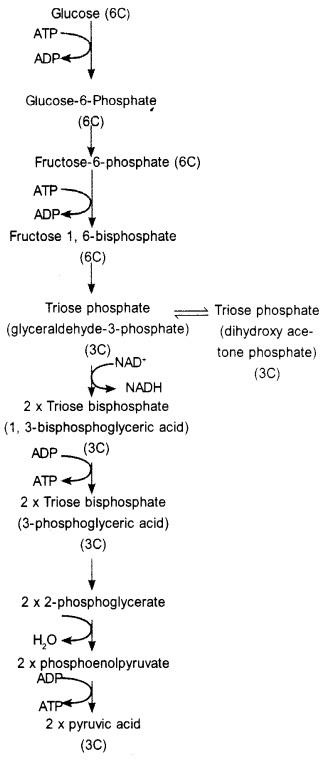 Plus One Botany Notes Chapter 10 Respiration in Plants 2