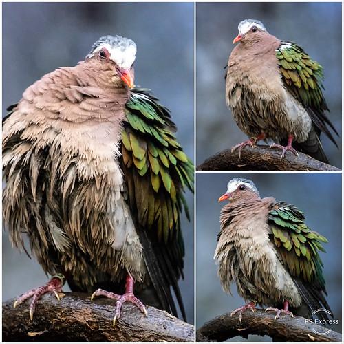 Bird's expression