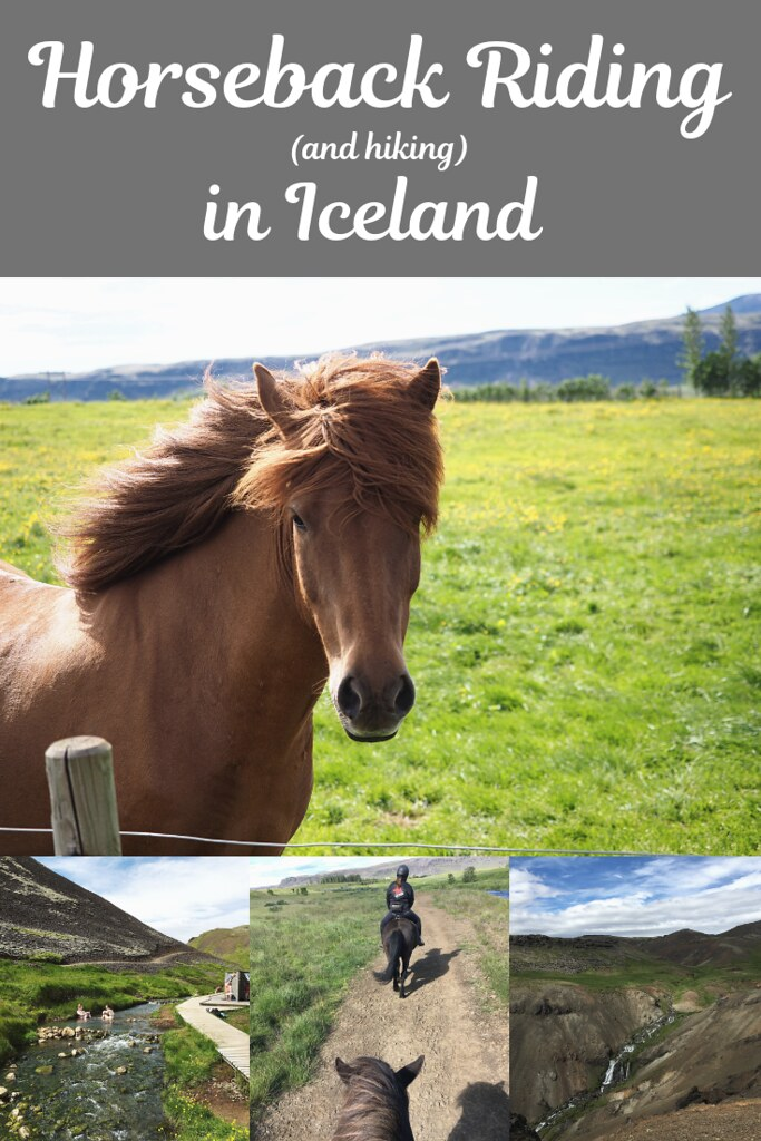 If you want a unique experience when in Iceland, you have to try horseback riding! With a unique gate, Icelandic horses give quite a fun ride. #iceland #icelandtravel #icelandichorse #icelandvacation #icelandtips