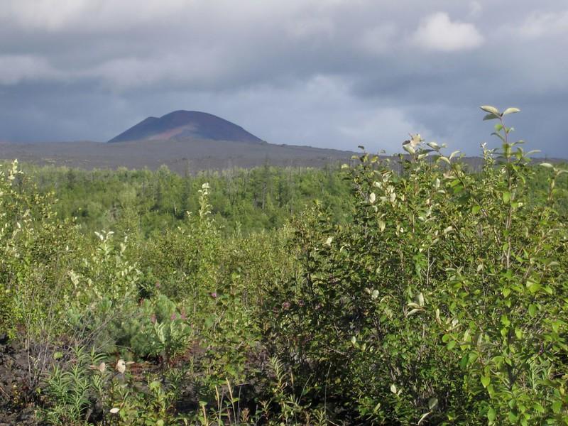 Граница леса