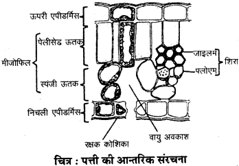 RBSE Solutions for Class 9 Science Chapter 8 Vital activities of living 3