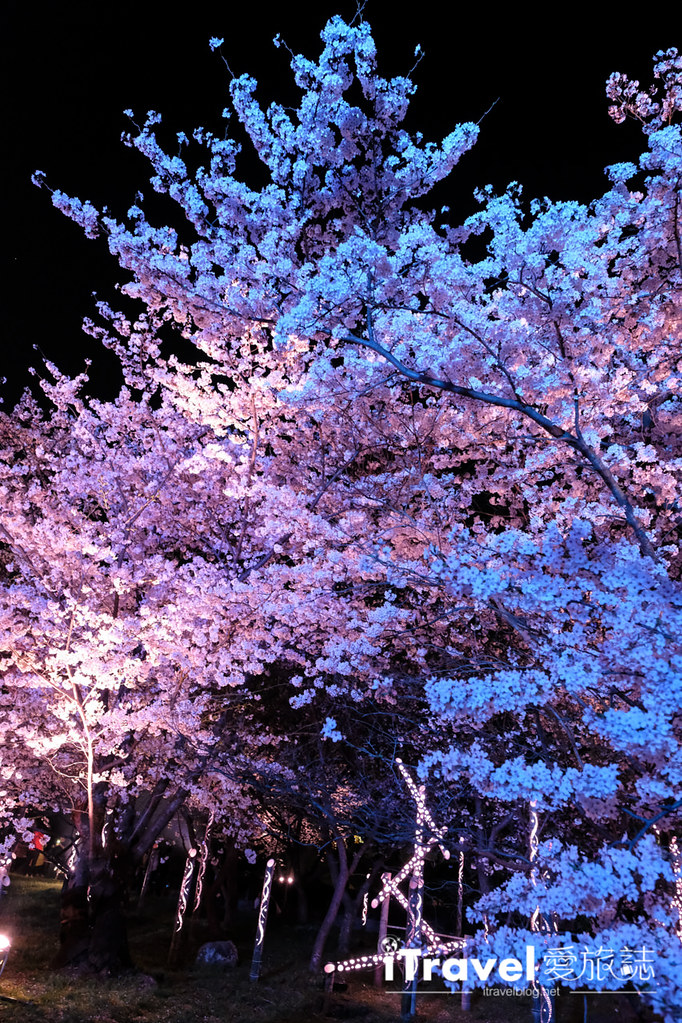 賞櫻景點 福岡城夜櫻 (73)