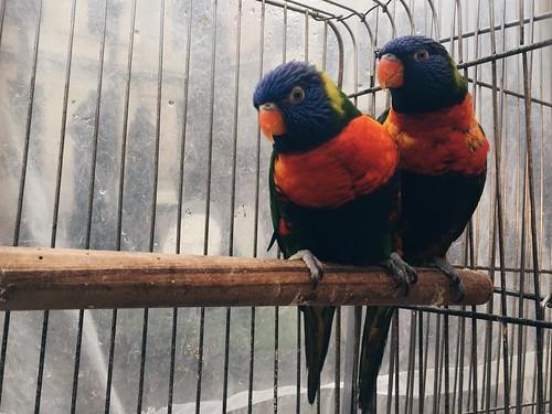 Mercado de pájaros