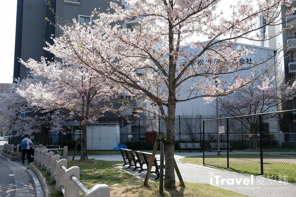 福岡賞櫻景點 美野島公園、東領公園 (22)