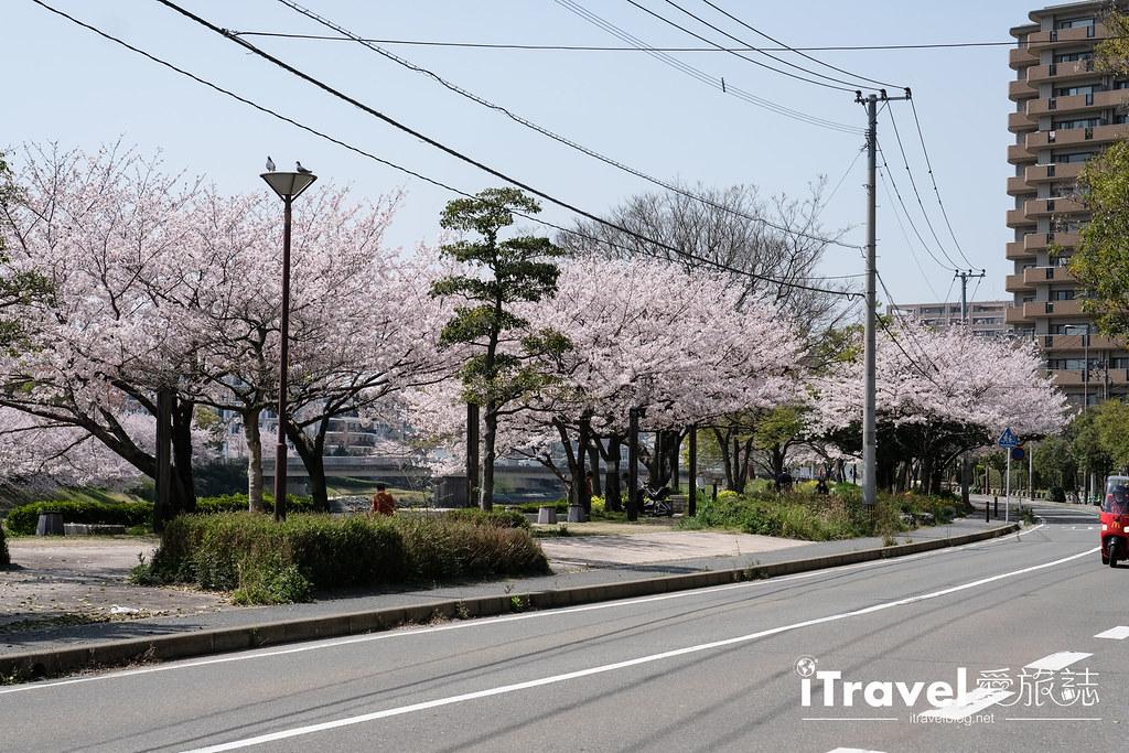 福岡賞櫻景點 美野島南公園 (3)