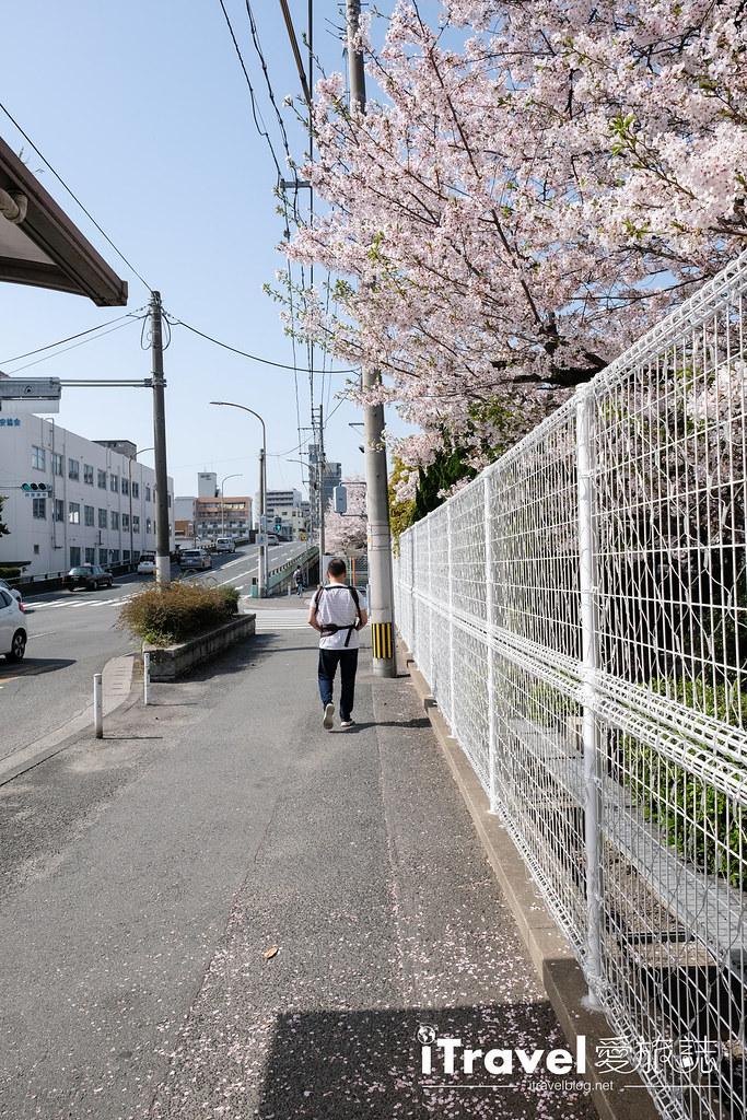 福岡賞櫻景點 美野島公園、東領公園 (5)