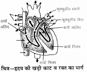 RBSE Solutions for Class 9 Science Chapter 8 Vital activities of living 29