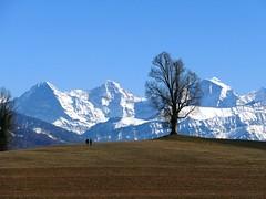 Eiger, Mönch, Jungfrau am 16.02.2019
