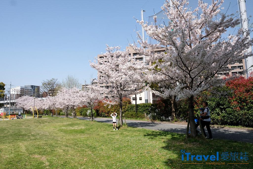 福岡賞櫻景點 美野島公園、東領公園 (1)