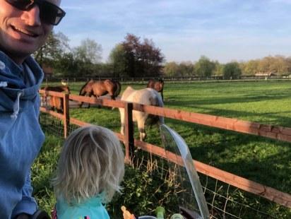Horses nearby