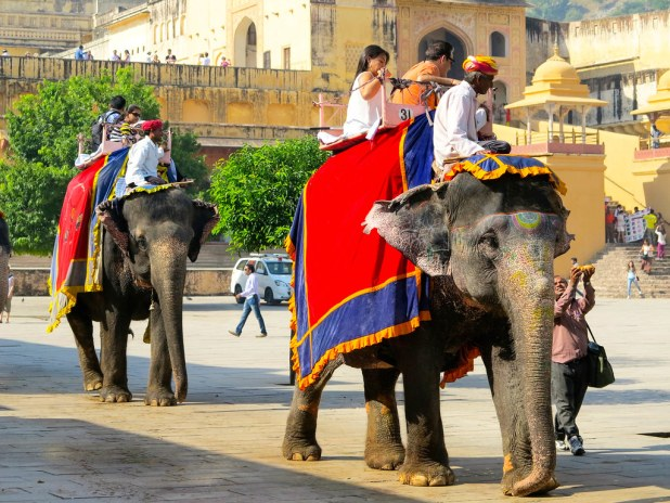 Elefantes en Amber