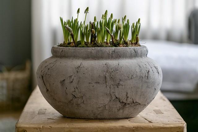 Pot met voorjaarsbloemen