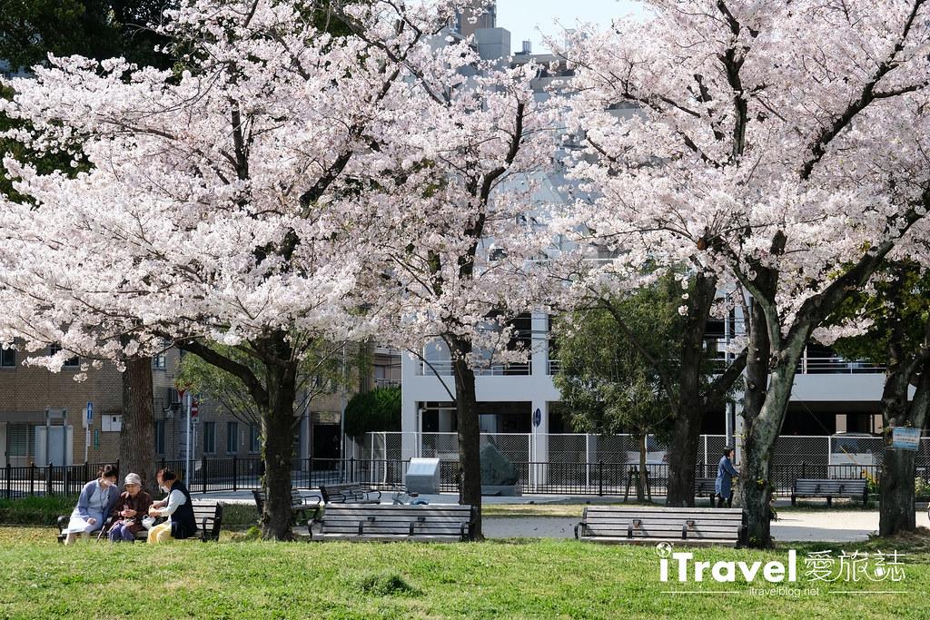 福岡賞櫻景點 美野島公園、東領公園 (13)