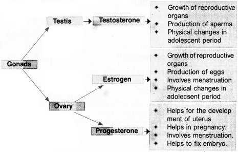 Plus One Zoology Notes Chapter 11 Chemical Coordination and integration 11