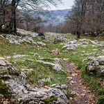 04_05-SanAdrianDeLizarraga