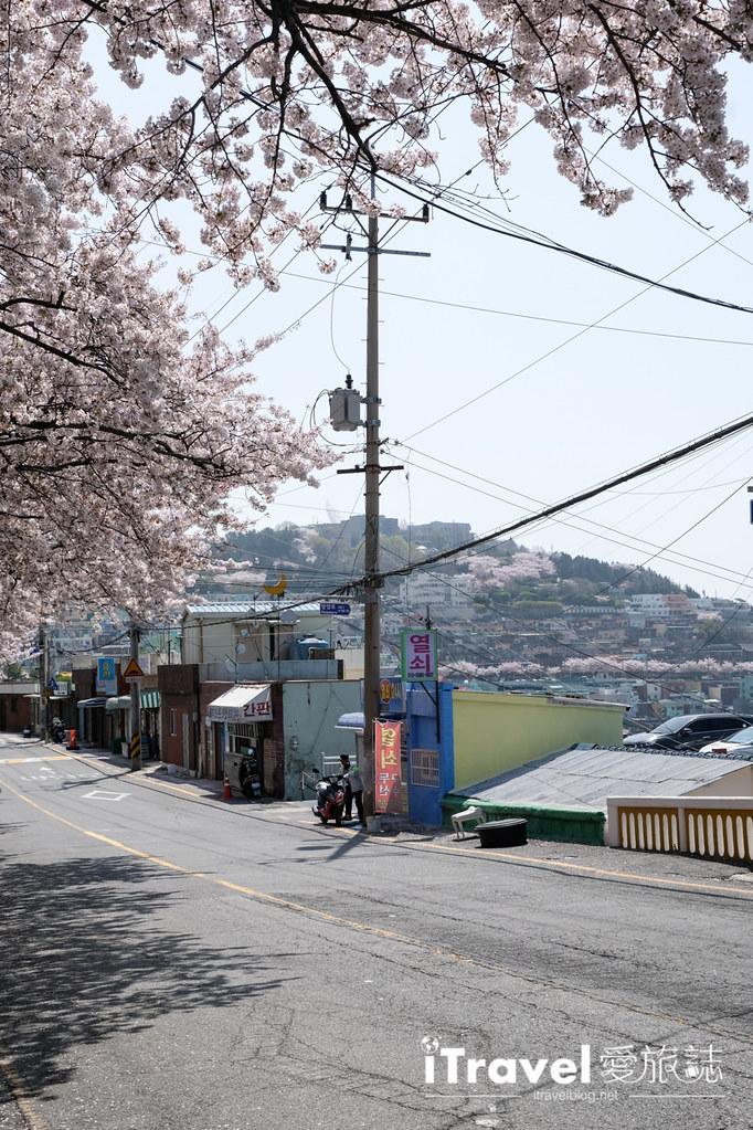 釜山賞櫻景點 東大新洞望洋路 (4)