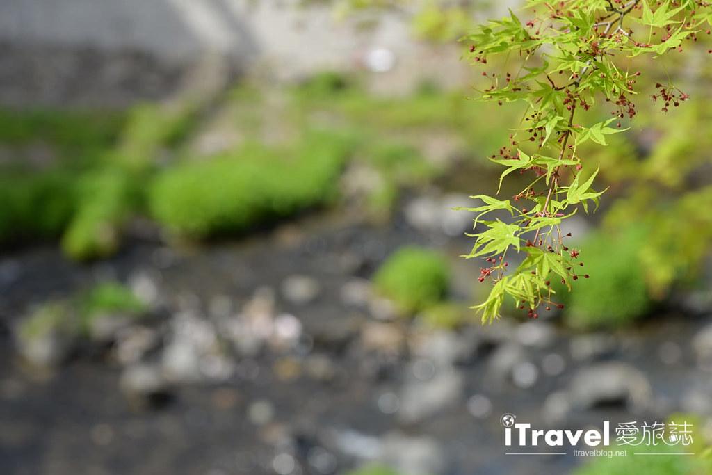京都賞櫻景點 井手町玉川堤 (14)