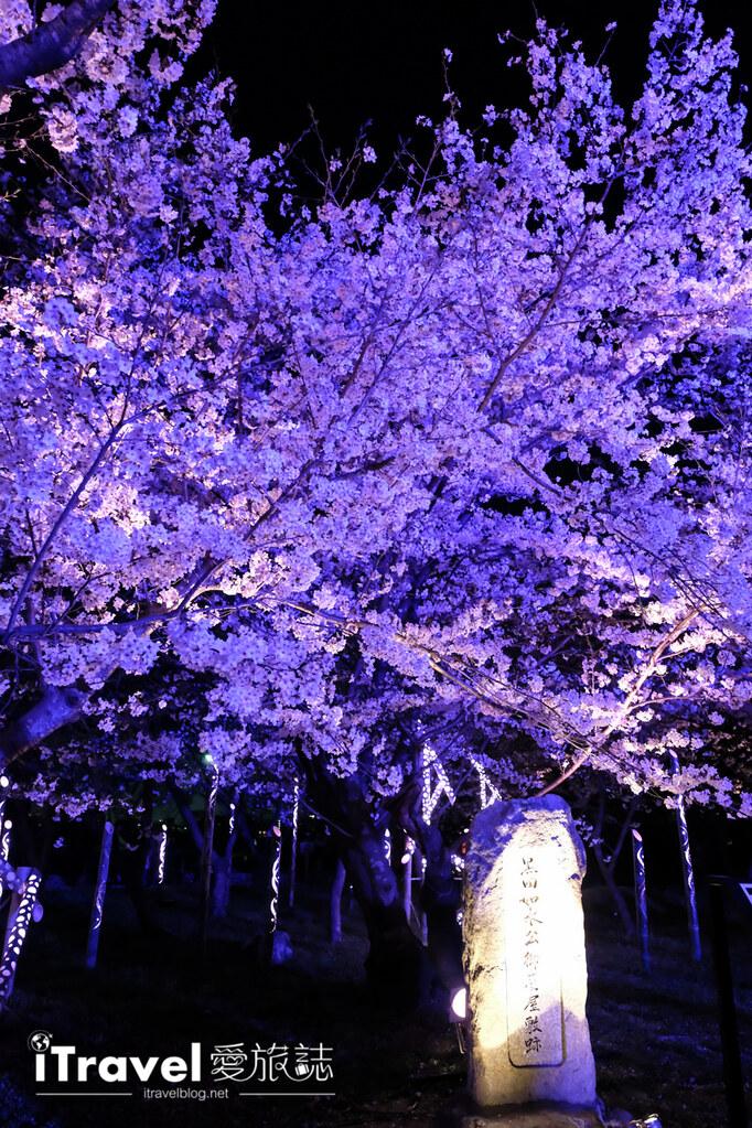 賞櫻景點 福岡城夜櫻 (72)