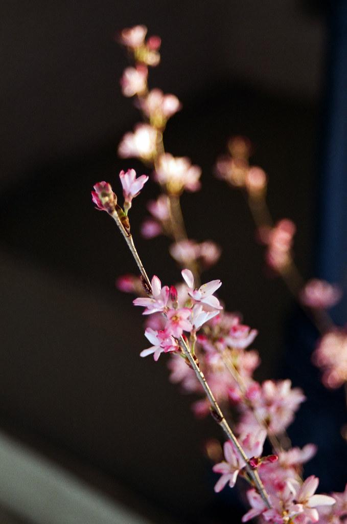 Spring blooms, macro