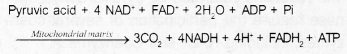 Plus One Botany Notes Chapter 10 Respiration in Plants 6