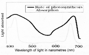 Plus One Botany Notes Chapter 9 Photosynthesis in Higher Plants 6