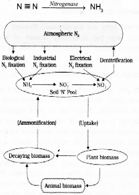 Plus One Botany Notes Chapter 8 Mineral Nutrition 1