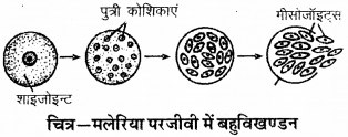 RBSE Solutions for Class 9 Science Chapter 8 Vital activities of living 22