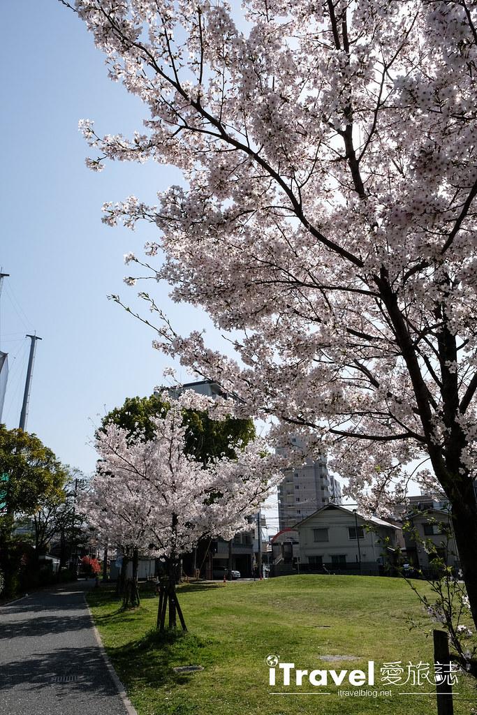 福岡賞櫻景點 美野島公園、東領公園 (16)