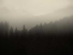 Mist in the wood