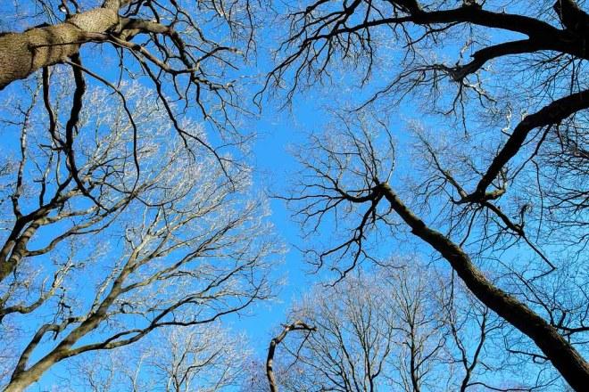 07 Treetop Sun