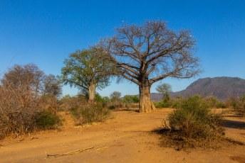 Lucía was nog steeds onder de indruk van Baobab bomen. Wel grappig dat er twee naast elkaar staan en alleen de linker blaadjes heeft.