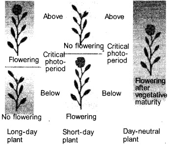 Plus One Botany Notes Chapter 11 Plant Growth and Development 7