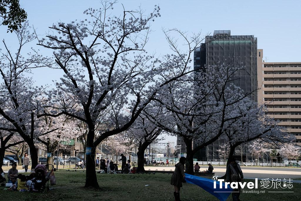 福岡賞櫻景點 美野島公園、東領公園 (30)