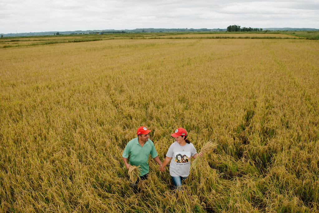Hoje são 15 assentamentos que cultivam arroz orgânico, em 13 municípios gaúchos. Foto Alex Garcia.jpg