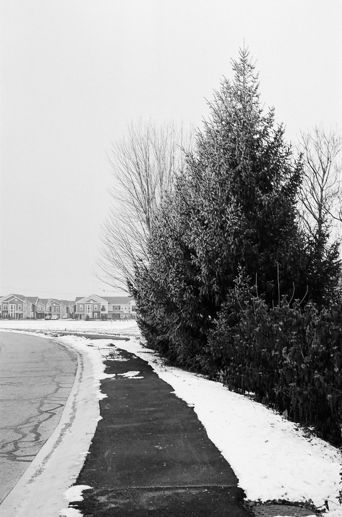 Pine on the walking path