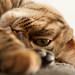 Världens bästa katt