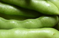 Vicia faba: Broad Beans