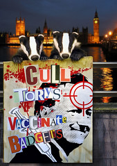Cull Torys Not Badgers