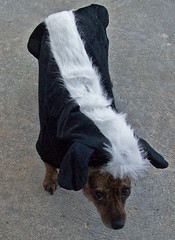 Skunk Dog Outfit