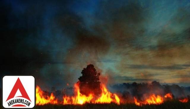 #Terkini: Enam Provinsi di Indonesia Siaga Darurat Asap