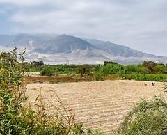 Farming amid the sand. #theworldwalk #travel #peru