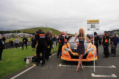 Matt Neal on the grid during the BTCC Knockhill Weekend 2016