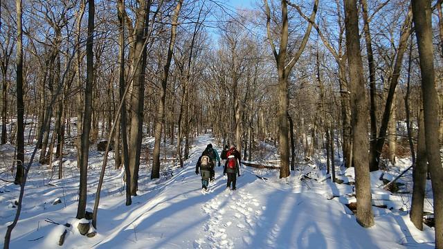 Snowy Pine Meadow Road