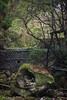 Photo:creekbed buddha pod By