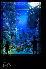 S.E.A Aquarium, Resorts World Sentosa